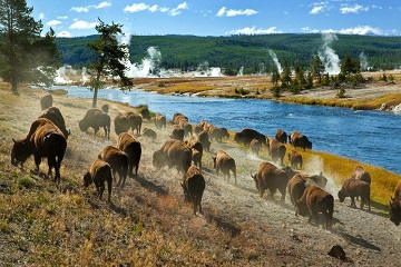 Yellowstone National Park North America